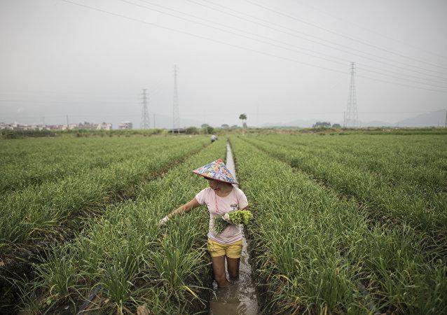 中国不会实行土地私有制,但耕地承包期将延长30年
