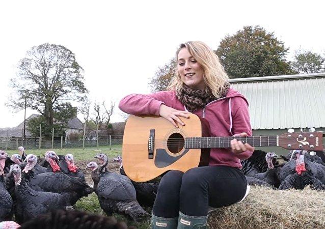 女农场主为火鸡弹吉他,希望火鸡孵蛋效果更好