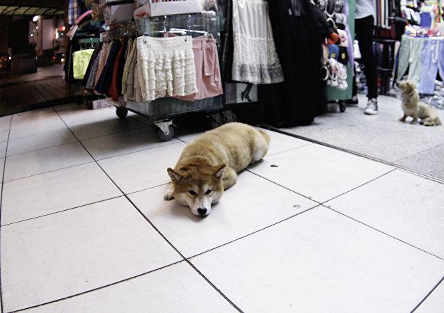 为何宠物在中国越来越受欢迎?