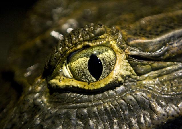 考古学家们在爱沙尼亚发现世界最古老的眼睛