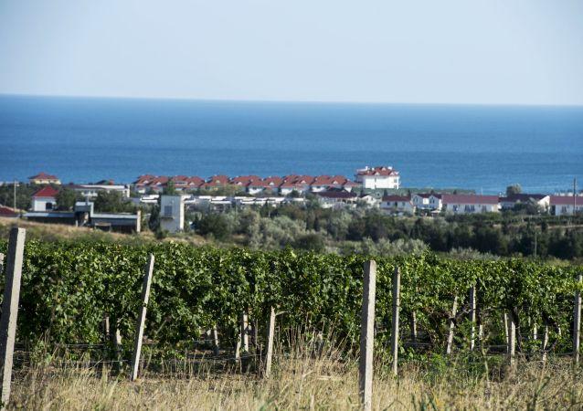 克里米亚葡萄园
