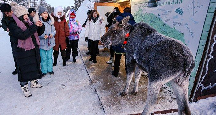 住在薩米民族村裡,那兒有當地的鹿肉飯,俄羅斯人給你做,喝魚湯,住在小木屋裡面