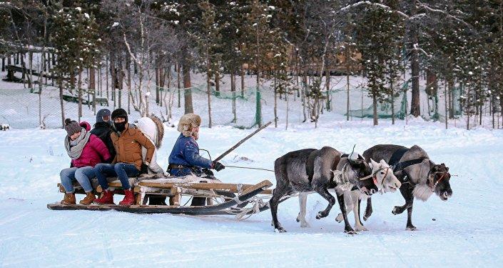 中國遊客在薩米民族村牽著馴鹿走過