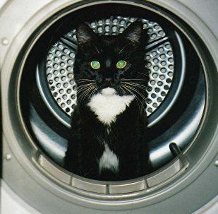 小猫在洗衣机里被洗20分钟后得以幸存