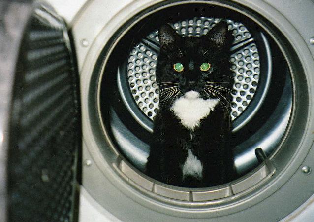 日本攝影師鏡頭下的「功夫貓咪」