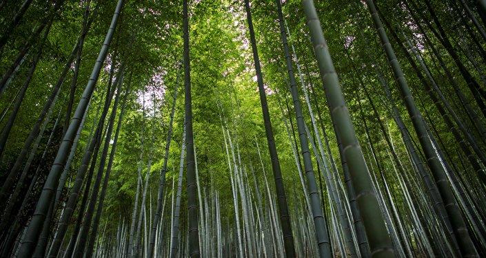 中国在环保领域走在世界前列