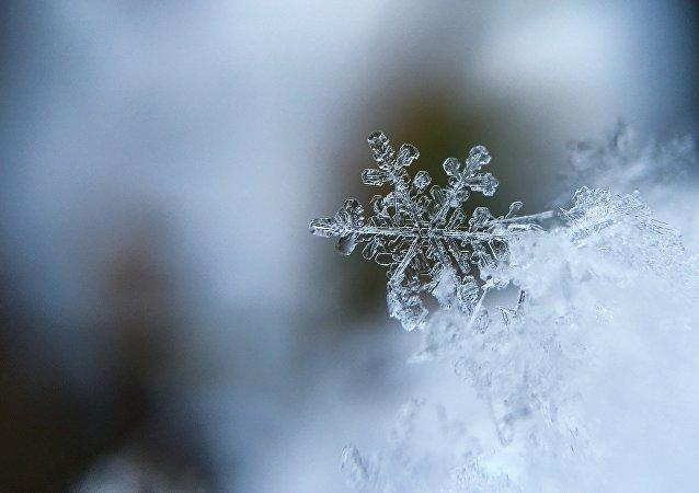生態學家對聖彼得堡出現藍雪的原因進行調查