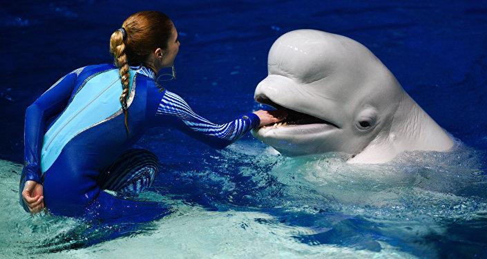 女驯兽师和白鲸