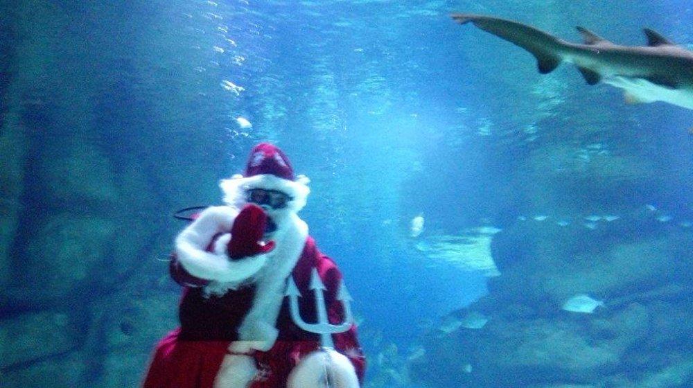 圣诞老人与鲨鱼在水族馆