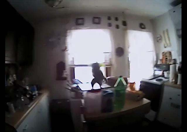 美國一隻溜入室內的「不速之客 – 松鼠」撲向警官