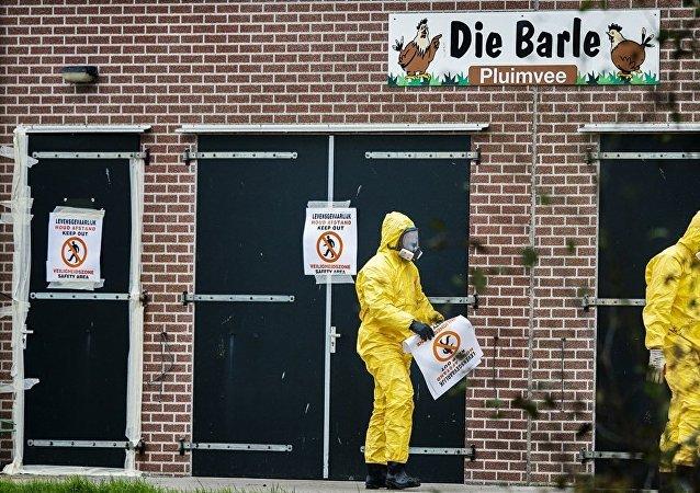 外媒:阿聯酋禁止從荷蘭進口所有禽類