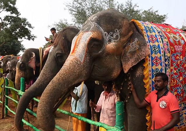 印度为大象开设一家SPA水疗馆