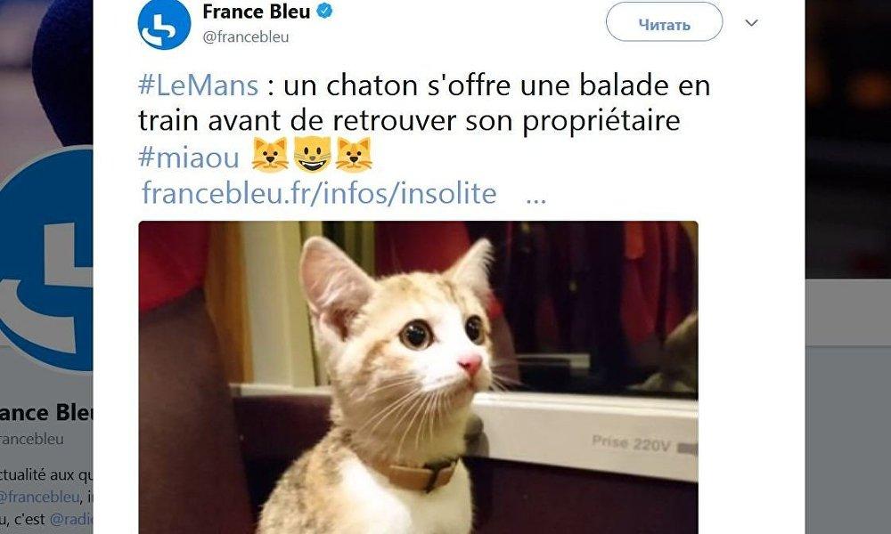 法国小猫坐火车寻主人
