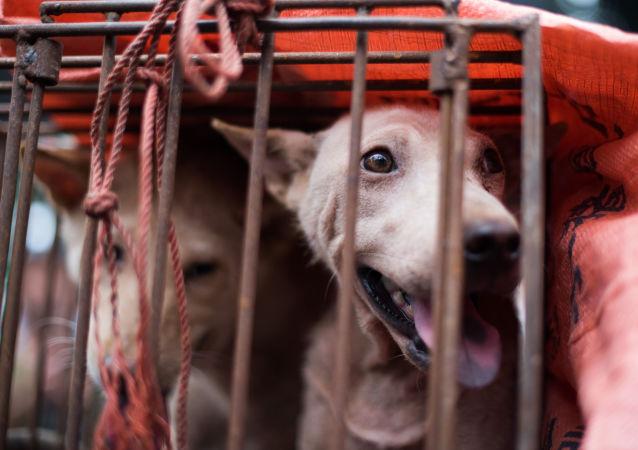 广东省一名男子因偷狗并将狗肉卖给饭馆被拘
