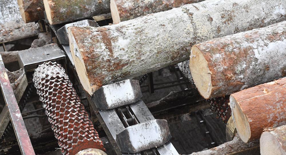 中国公司将在俄鄂木斯克州成立木材加工合资企业