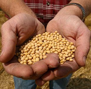 中國將區塊鏈技術引入大豆交易
