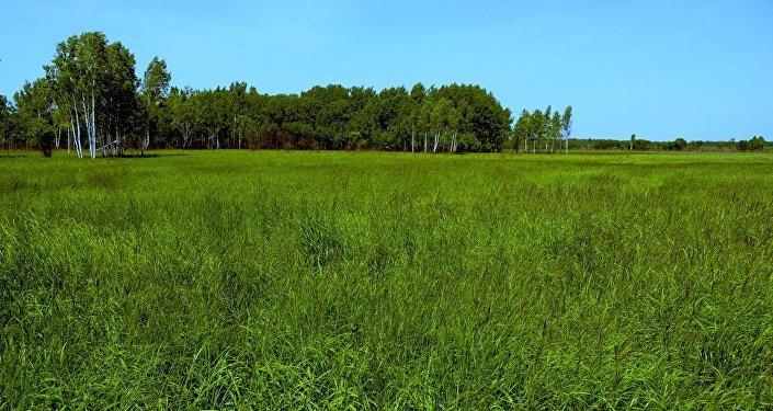 获得远东一公顷土地的俄罗斯公民已超过3.5万人