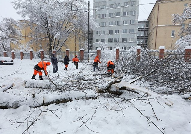 莫斯科降雪導致210多輛汽車被樹木砸到
