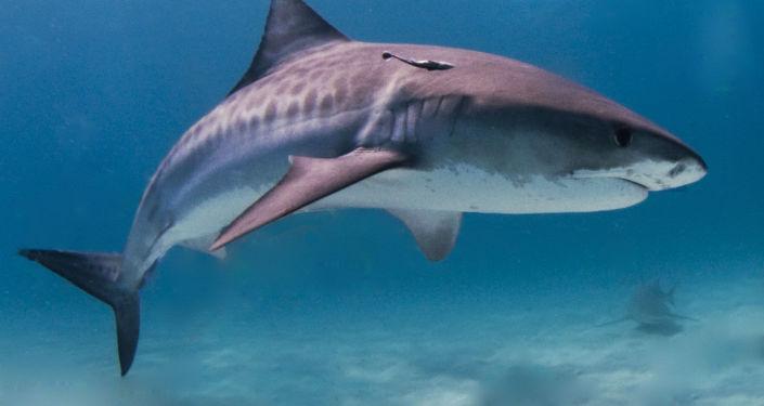澳大利亚老人徒手打退鲨鱼