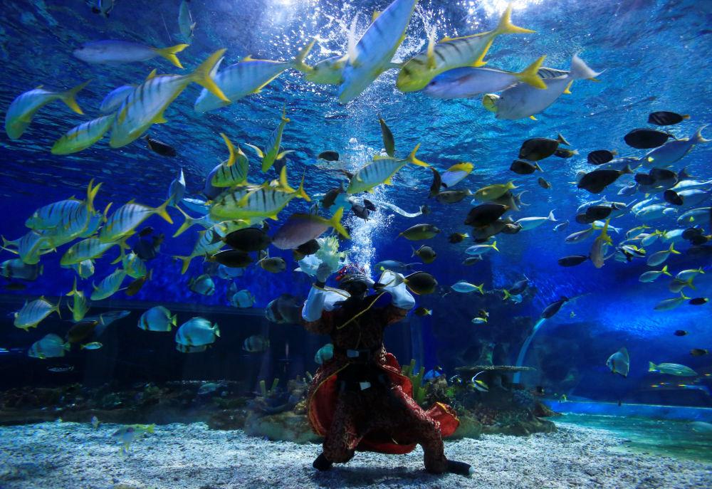 菲律賓馬尼拉海洋公園水族館,一位專業潛水員裝扮成財神爺