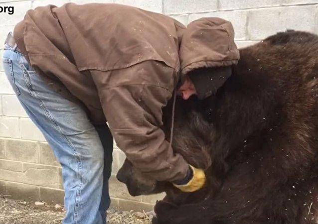 美国人展示如何安慰一头熊