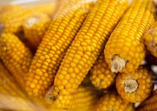 中糧集團啓動俄濱海邊疆區糧食進口業務