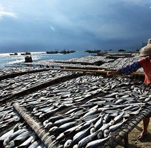 中国近海的鱼几乎被捕光