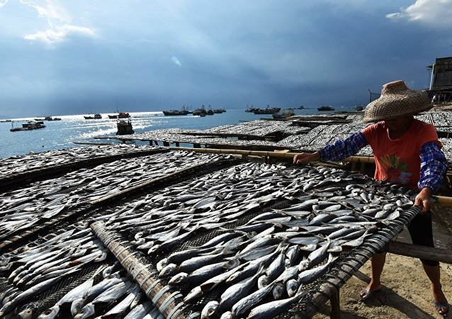 """中国将在海南建设首个深远海""""智能渔场"""""""
