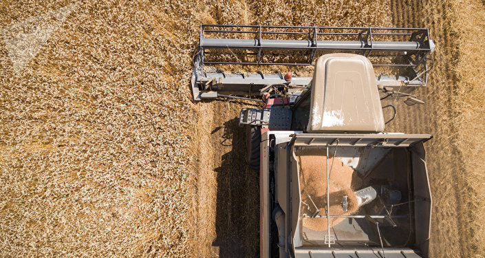 俄6個地區可每年向中國出口小麥5000萬噸