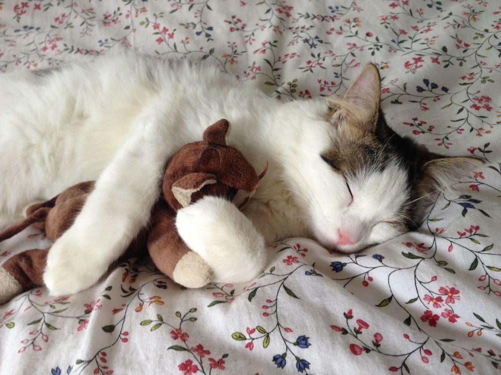 抱着心爱的玩具睡觉