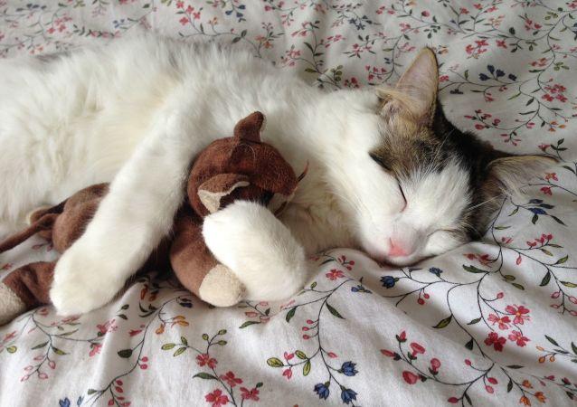 醫生解釋為甚麼不能和貓一起睡覺