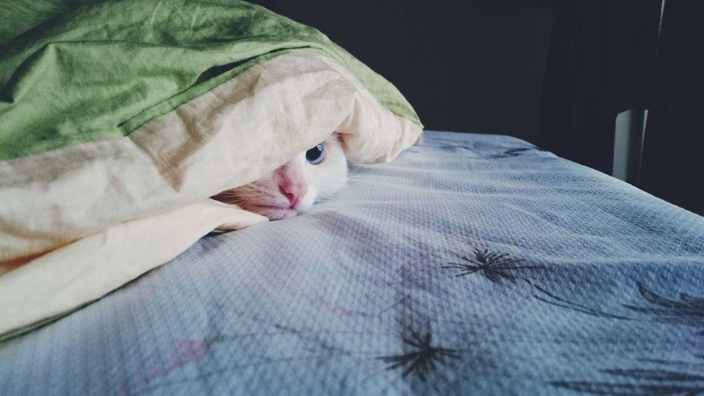 藏在毯子底下