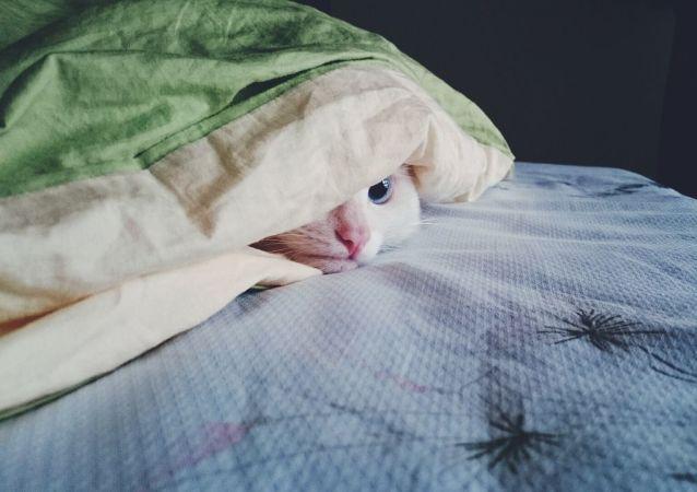 媒体:新西兰或禁止家中养猫