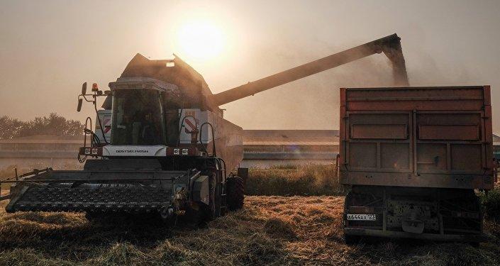 俄农业部下调粮食产量预期至1.05-1.1亿吨