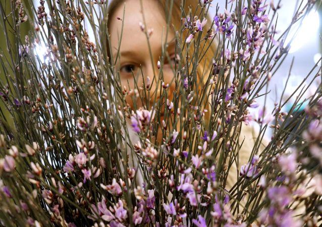 """莫斯科市长:""""三八""""节前莫斯科运入5000万朵鲜花用于销售"""