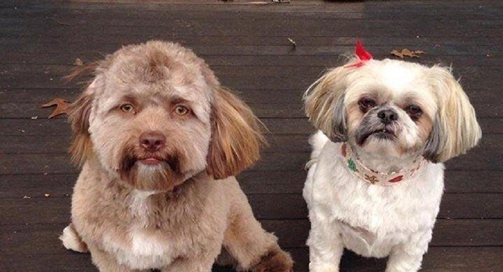 人臉狗狗嚇到網友