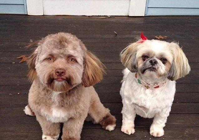 人脸狗狗吓到网友