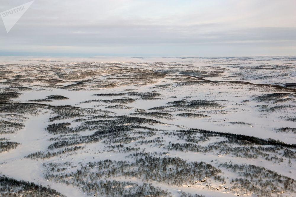 摩尔曼斯克州科拉半岛的苔原
