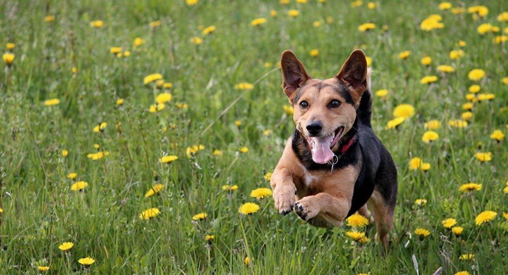 狗狗收容所的狗被穿恐龙服的人吓傻