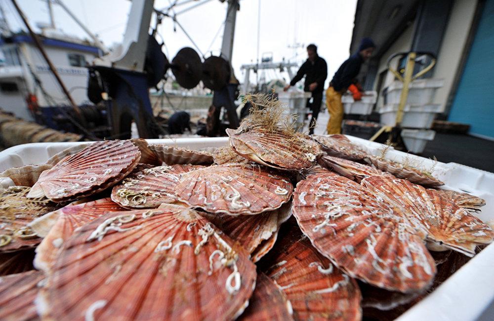 濱海邊疆區的自然氣候條件非常適合人工養殖各種海洋生物。這是吸引國內外投資者的競爭優勢之一