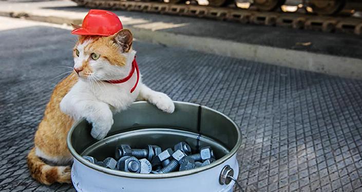 克里米亚大桥监工小猫
