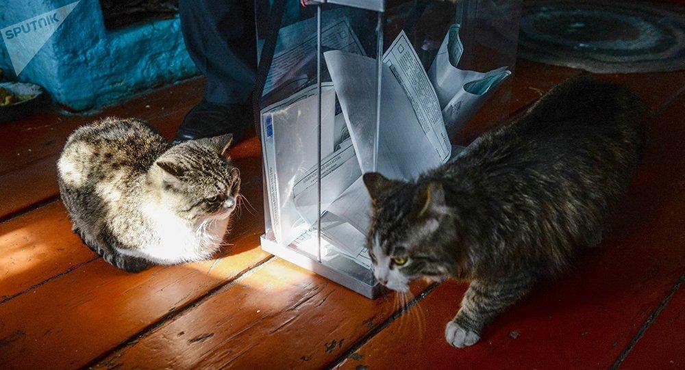 动物保护者们打算在俄罗斯建第一座猫咪收容所
