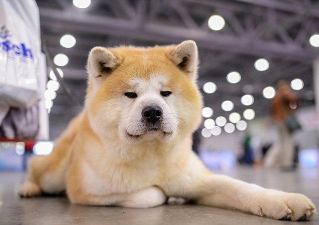 科學家警告:狗會成為新型流感病原體
