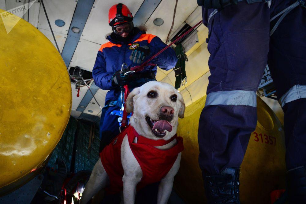 俄緊急情況部救援人員在哈巴羅夫斯克邊疆區開展傘降集訓
