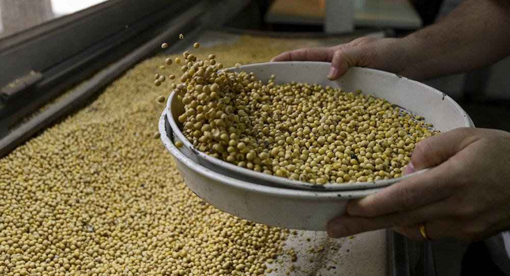 中国将从滨海边疆区采购20万吨大豆