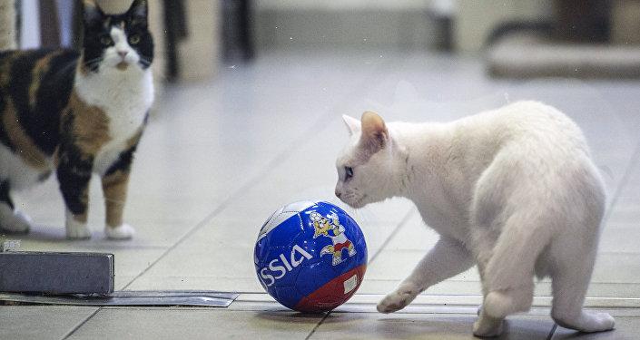 先知貓將預測2018世界杯賽結果