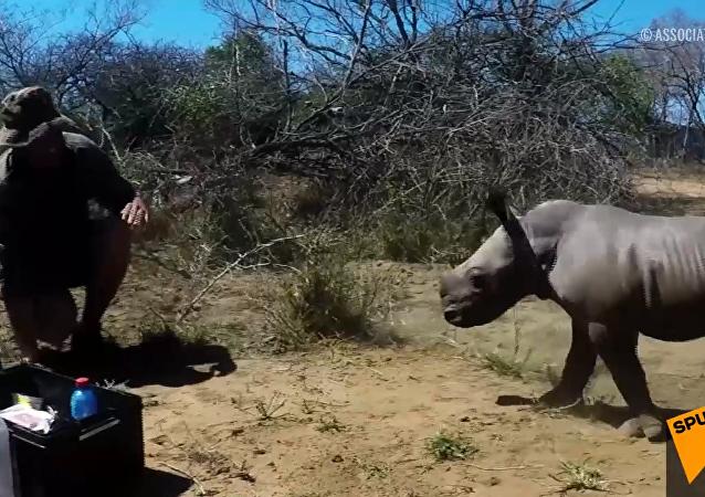 犀牛保护母亲