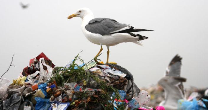 俄工贸部:垃圾处理或将成为俄中合作的新领域