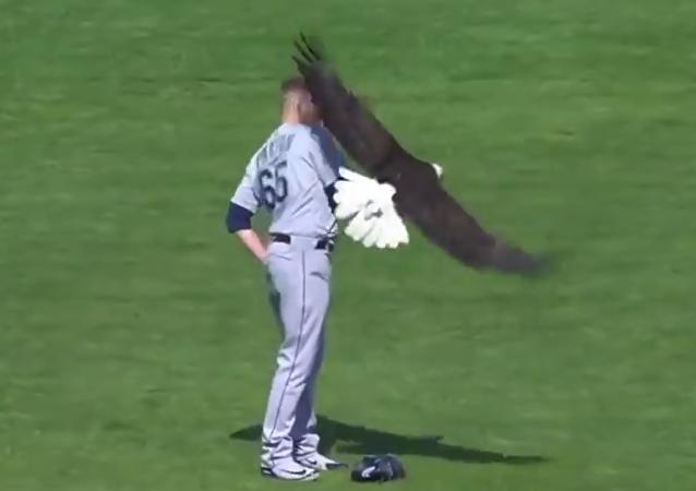 自由之鸟:一只白头雕在演奏美国国歌时落在了一名投手的肩上