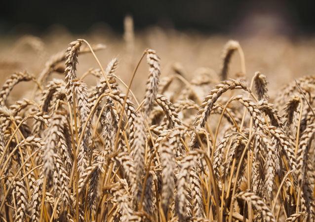 普京:農業已成為俄羅斯經濟發展的火車頭之一